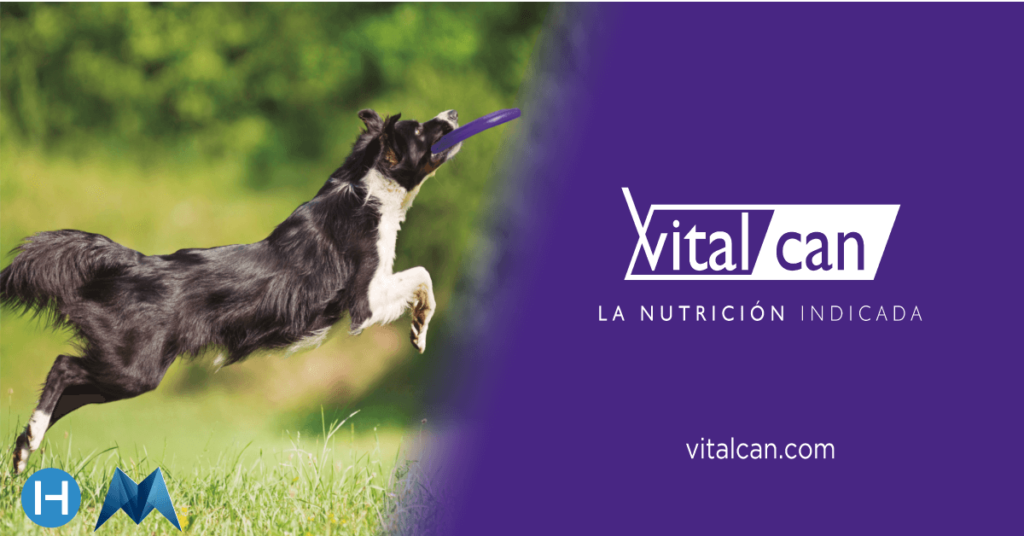 blockchain logistics case study Vitalcan pet food