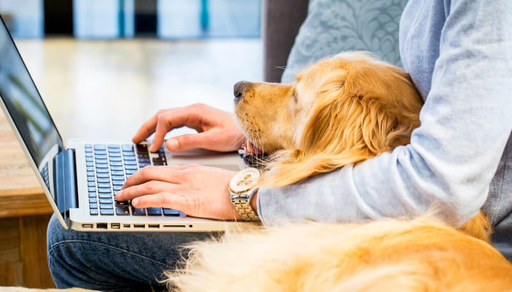 animal wellbeing header
