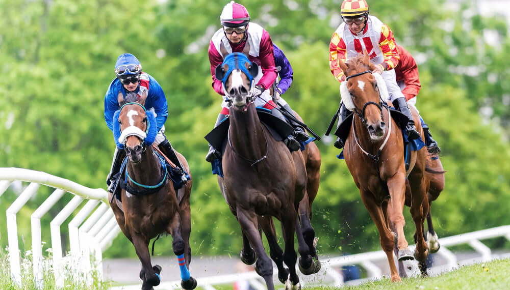 horses header